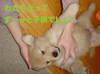 Daisy_kitatoki9_006
