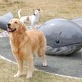 鯨に乗ってドンブラコⅡ